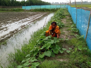 PH 2Woman farmer working in her farm