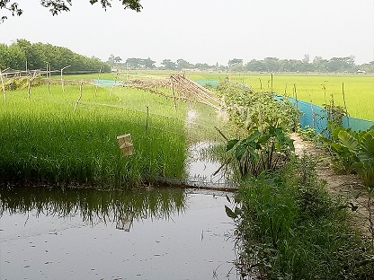 Ph 4Stored fresh water in ditch for irrigation and fish culture, rice in flat land and vegetables in dyke