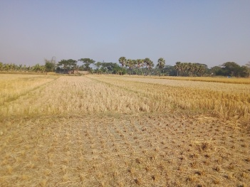 agri. field in 2016