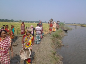 dyke preparation to store freshwater in canal by 'joba_ women group