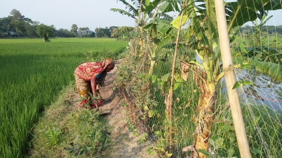 wife of babul working in the vegetable field